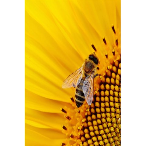 Sun Flower Bees Summer Garden 5.5  x 8.5  Notebooks