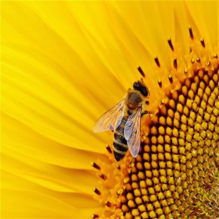 Sun Flower Bees Summer Garden Magic Photo Cubes