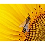 Sun Flower Bees Summer Garden Deluxe Canvas 14  x 11  14  x 11  x 1.5  Stretched Canvas