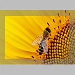 Sun Flower Bees Summer Garden Deluxe Canvas 18  x 12   18  x 12  x 1.5  Stretched Canvas