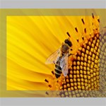 Sun Flower Bees Summer Garden Deluxe Canvas 20  x 16   20  x 16  x 1.5  Stretched Canvas