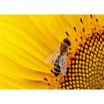 Sun Flower Bees Summer Garden Heart 3D Greeting Card (7x5) Back