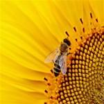 Sun Flower Bees Summer Garden Twin Hearts 3D Greeting Card (8x4) Inside