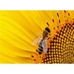 Sun Flower Bees Summer Garden Circle 3D Greeting Card (7x5) Back