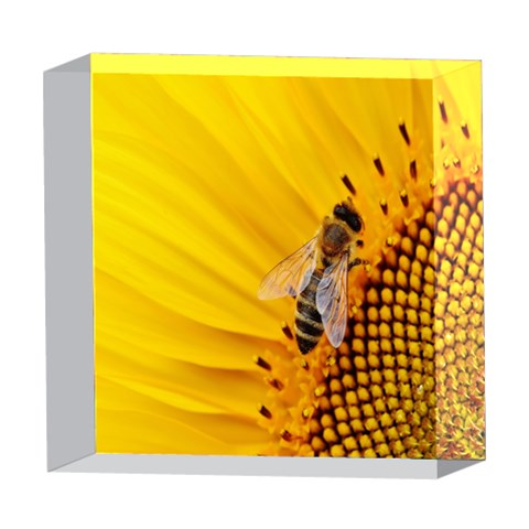 Sun Flower Bees Summer Garden 5  x 5  Acrylic Photo Blocks