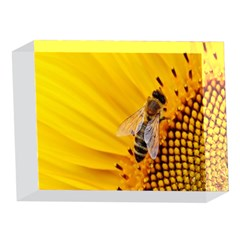 Sun Flower Bees Summer Garden 5 x 7  Acrylic Photo Blocks