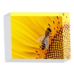 Sun Flower Bees Summer Garden 5 x 7  Acrylic Photo Blocks Front