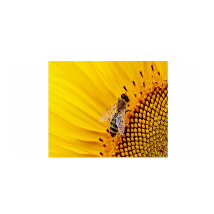 Sun Flower Bees Summer Garden Satin Wrap