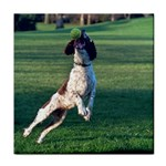 English Springer Catching Ball Tile Coasters Front