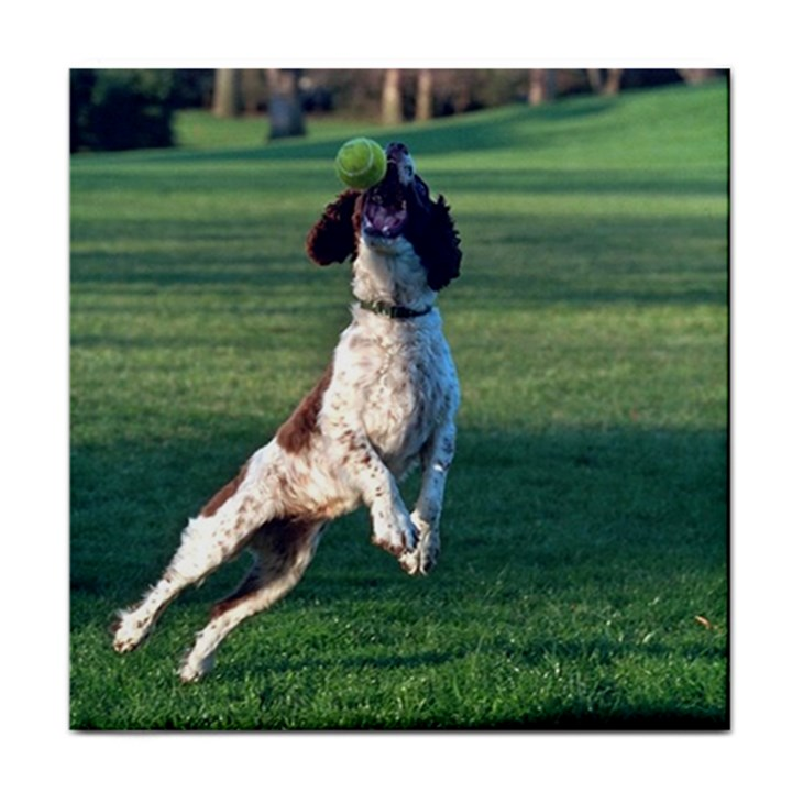 English Springer Catching Ball Tile Coasters