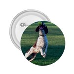 English Springer Catching Ball 2.25  Buttons Front