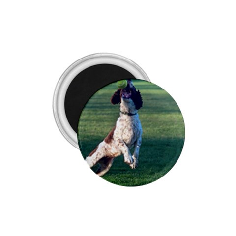 English Springer Catching Ball 1.75  Magnets
