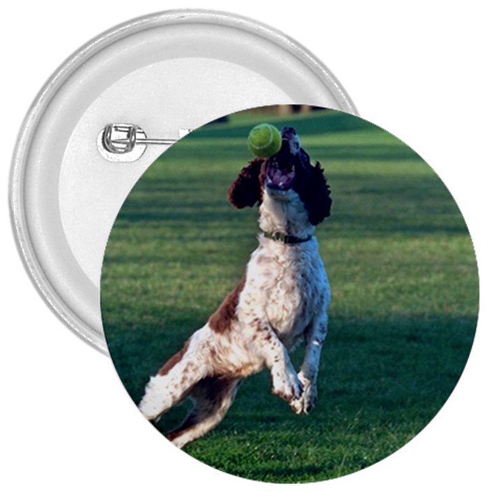 English Springer Catching Ball 3  Buttons