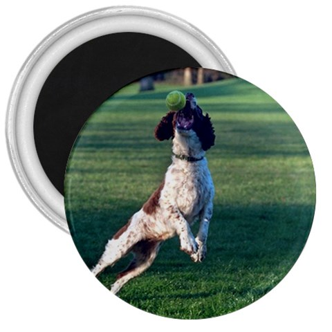 English Springer Catching Ball 3  Magnets