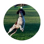 English Springer Catching Ball Ornament (Round)  Front
