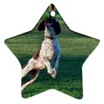 English Springer Catching Ball Ornament (Star)  Front