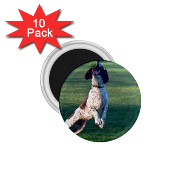 English Springer Catching Ball 1.75  Magnets (10 pack)