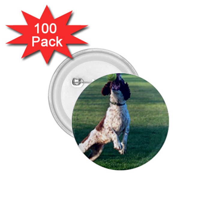 English Springer Catching Ball 1.75  Buttons (100 pack)