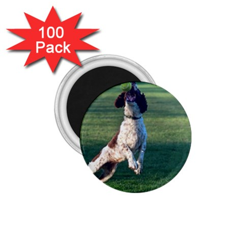 English Springer Catching Ball 1.75  Magnets (100 pack)