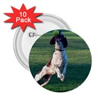 English Springer Catching Ball 2.25  Buttons (10 pack)  Front