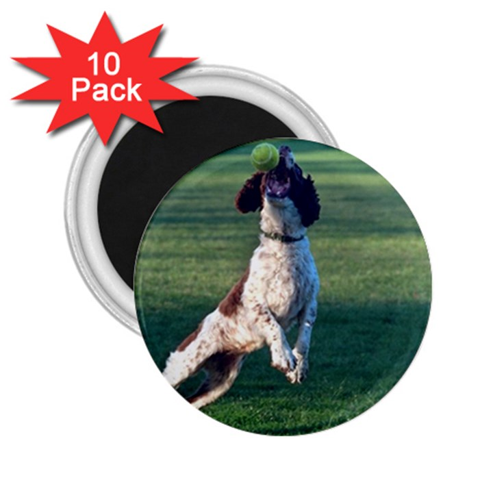 English Springer Catching Ball 2.25  Magnets (10 pack)