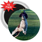 English Springer Catching Ball 3  Magnets (10 pack)  Front