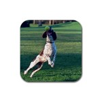 English Springer Catching Ball Rubber Square Coaster (4 pack)  Front