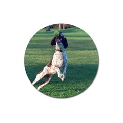 English Springer Catching Ball Magnet 3  (Round)
