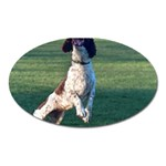 English Springer Catching Ball Oval Magnet Front