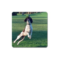 English Springer Catching Ball Square Magnet