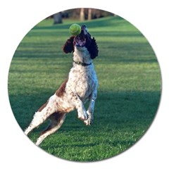 English Springer Catching Ball Magnet 5  (Round)