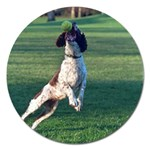 English Springer Catching Ball Magnet 5  (Round) Front