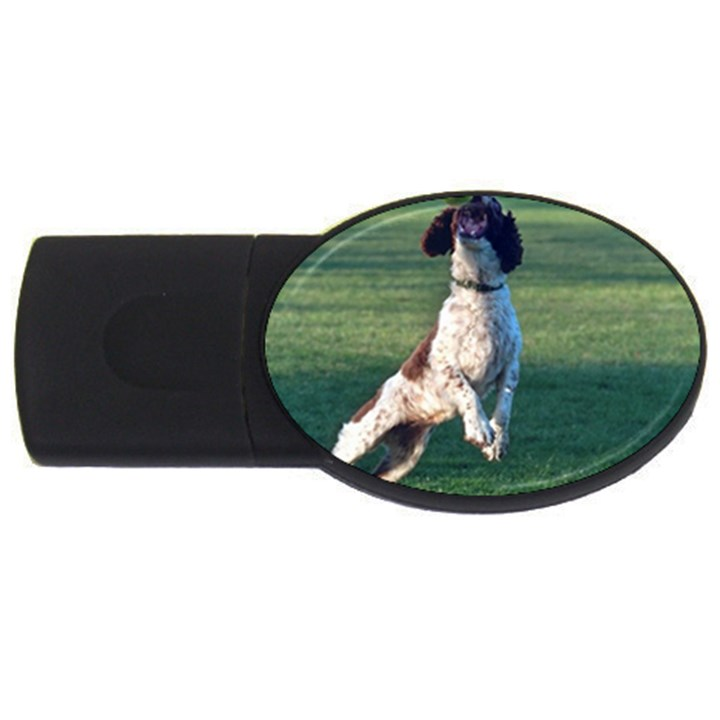 English Springer Catching Ball USB Flash Drive Oval (1 GB)