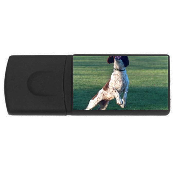 English Springer Catching Ball USB Flash Drive Rectangular (1 GB)