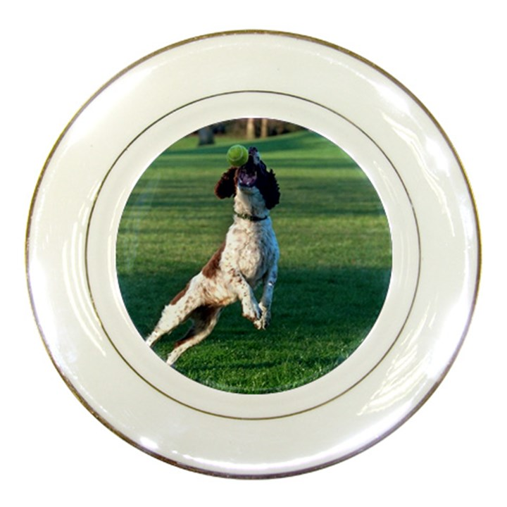 English Springer Catching Ball Porcelain Plates
