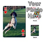 English Springer Catching Ball Playing Cards 54 Designs  Front - HeartK