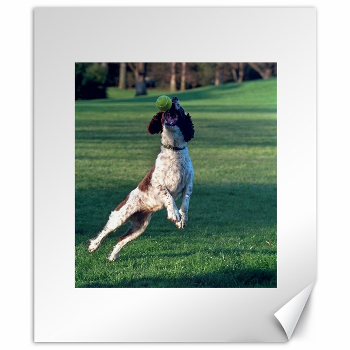 English Springer Catching Ball Canvas 8  x 10
