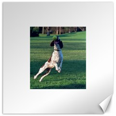 English Springer Catching Ball Canvas 12  X 12