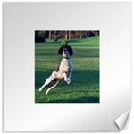 English Springer Catching Ball Canvas 12  x 12   12 x12 Canvas - 1