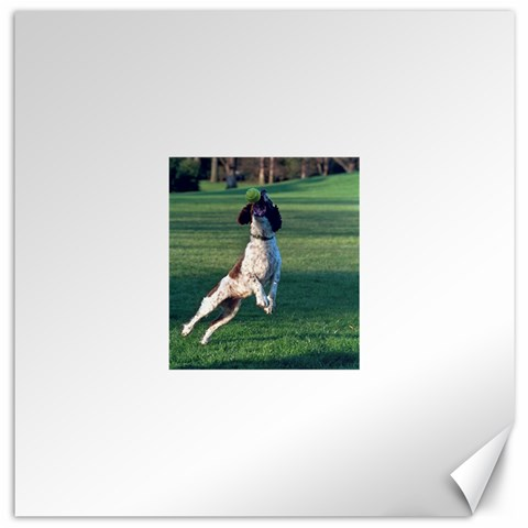 English Springer Catching Ball Canvas 16  x 16