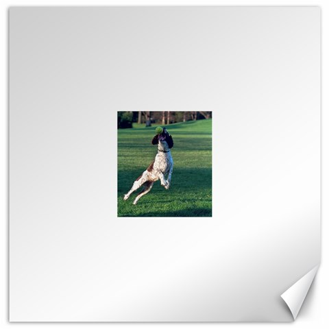 English Springer Catching Ball Canvas 20  x 20