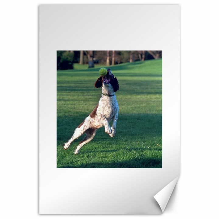 English Springer Catching Ball Canvas 24  x 36