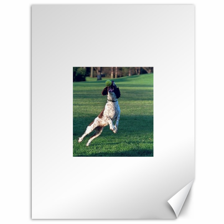 English Springer Catching Ball Canvas 36  x 48