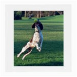 English Springer Catching Ball Medium Glasses Cloth Front