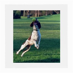 English Springer Catching Ball Medium Glasses Cloth (2-Side)