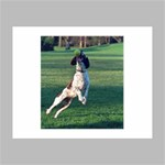 English Springer Catching Ball Canvas 10  x 8  10  x 8  x 0.875  Stretched Canvas