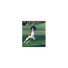 English Springer Catching Ball 5.5  x 8.5  Notebooks