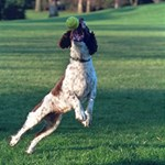English Springer Catching Ball Magic Photo Cubes Side 1