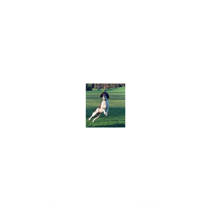 English Springer Catching Ball Shower Curtain 48  x 72  (Small)