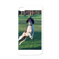 English Springer Catching Ball Apple iPhone 4 Case (White)